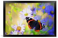 Red Admiral Butterfly on Flowers, Framed Print