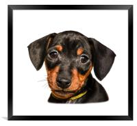 Portrait of black puppy, Framed Print