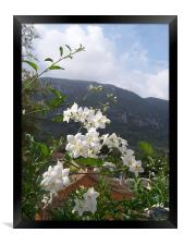 Jasmine With Mountains Beyond, Framed Print