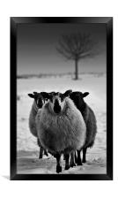 Wyrd Sisters,Farm animals, Framed Print