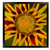 Yellow flower, Framed Print