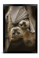 Hang in There , Framed Print