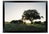 Setting sun behind a remote tree., Framed Print