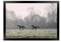 Early morning light on two horses in a frost cover, Framed Print