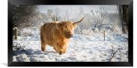 Highland Cow in Snow, Framed Print
