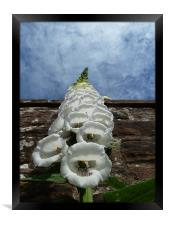 Foxglove Heading for the Sky, Framed Print