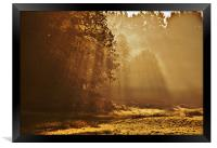 looking towards the light, Framed Print