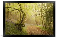 Walk through the Bluebell woods, Framed Print