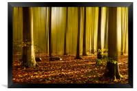 Autumn fall beech woods, Framed Print