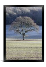 Frosted tree, Framed Print