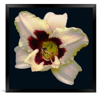Glorious 2 Colour Lily, Framed Print