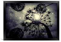 Allium sky, Framed Print