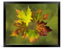 Autumn composition, Framed Print