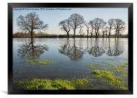 Reflections in flood water, Framed Print