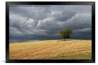 Stormy clouds and lone tree, Framed Print