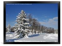 After the Snow 2, Framed Print