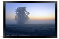 Oak in the mist, Framed Print