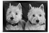 Two West Highland White Terriers, Framed Print