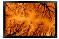 Russet Abstract Trees, Framed Print