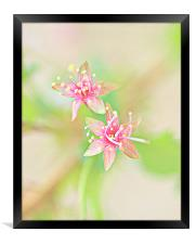Abstract Cherry Blossom HDR, Framed Print