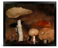 First signs of Autumn, Framed Print
