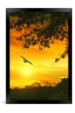 GOLDEN SUNSET, Framed Print