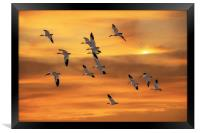 SNOW GEESE OF AUTUMN, Framed Print