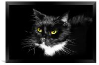 Domestic Black and White cat canvas print, Framed Print