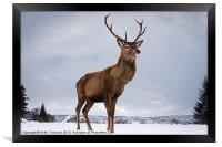 Highland Deer, Framed Print