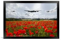 Poppy Fly Past, Framed Print