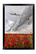 Poppies Dropped , Framed Print