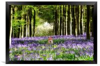 Fox and The Bluebells, Framed Print