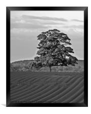 Solitary Tree, Framed Print