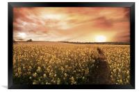 Sunset Fields, Framed Print