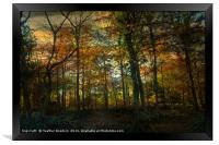 Autumn to Winter., Framed Print