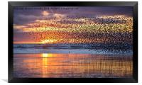 Starlings At Sunset, Framed Print