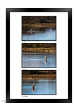 Fly Fishing Triptych White Background, Framed Print