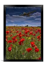 Poppies, Framed Print