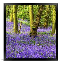 If you go down to the Woods, Framed Print