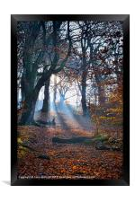 Chevin Forest Park #2, Framed Print