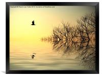 Dusk flight, Framed Print