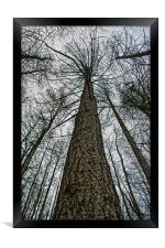 Reach For The Sky, Framed Print