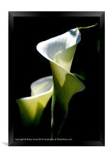 Peace Lily, Framed Print