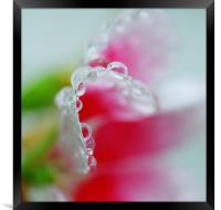 Abstract of raindrops on a Petunia flower leaf , Framed Print