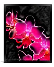 Neon Orchid, Framed Print