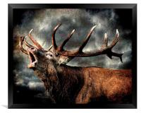 Call of the wild, Framed Print