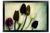 Tulip Ghosts, Framed Print