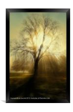 FIRE TREE, Framed Print