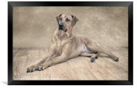 THE RHODESIAN RIDGEBACK, Framed Print
