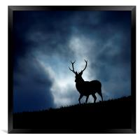 The stag, Framed Print